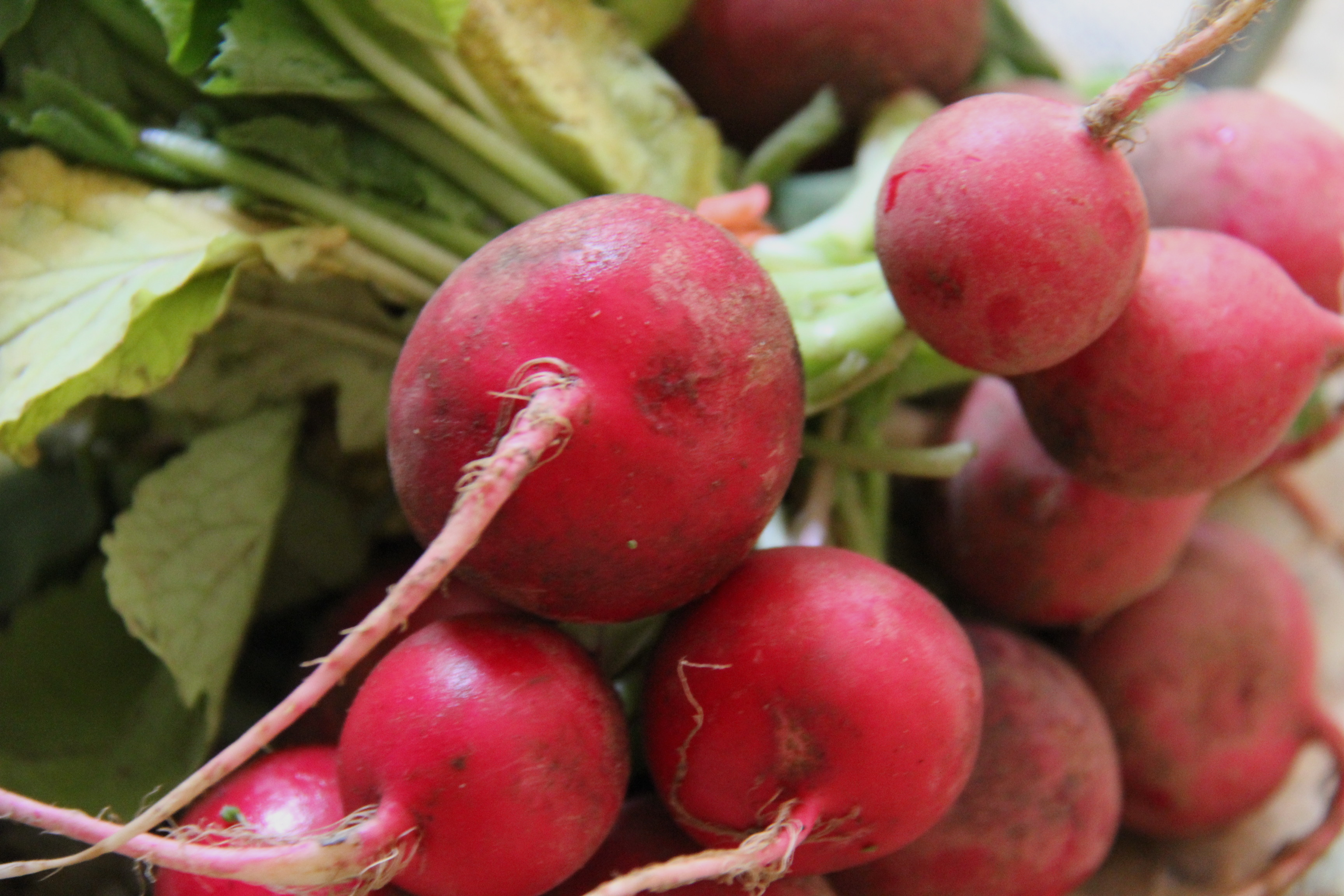 Straight from the Farm: A Crisp Radish Salad